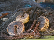 Cod Fishing Nets