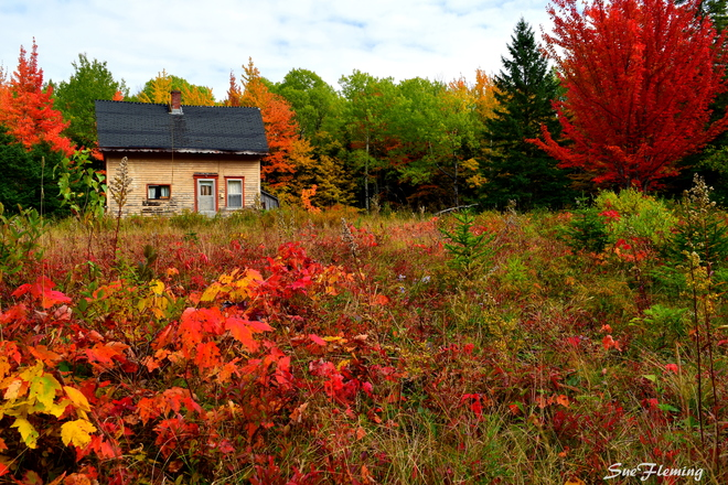 News Where To See The Best And Brightest Fall Foliage In Canada - 8 best places in the us to watch fall foliage