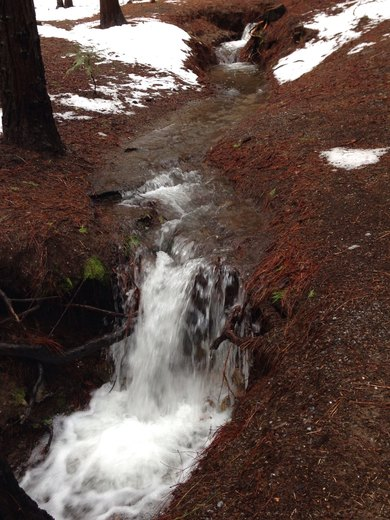 Dorrington Runoff
