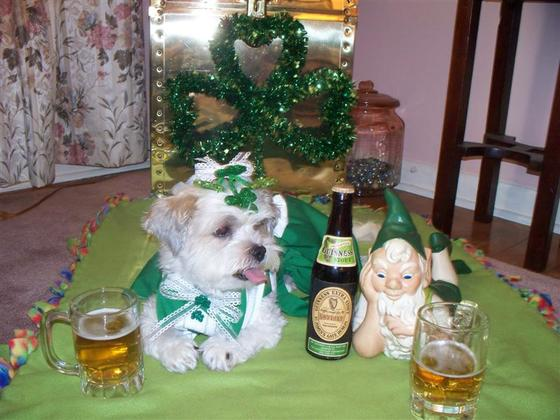 MISS DIXIE MONROE..LIL IRISH LASS AND ONE OF HER BFF'S O'SHAUGHNESSY THE LEPRECH