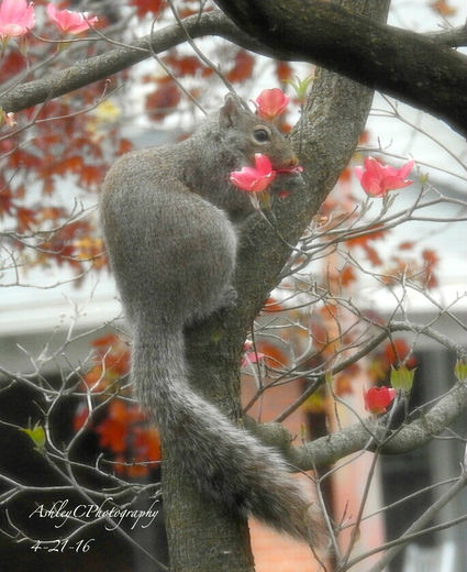 Spring Squirrel :)