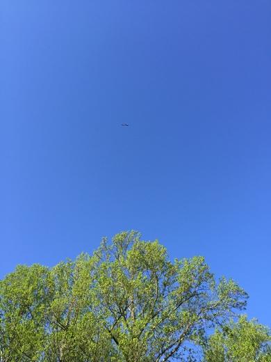 3 bald eagles in Dover zoom in