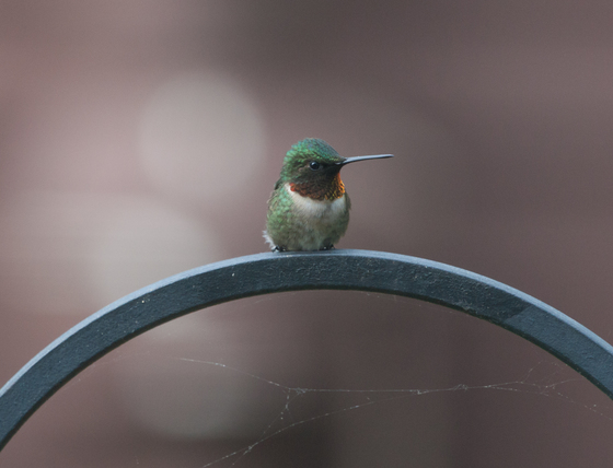 Hummingbird light show