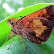 L'été vient avec de beaux papillons