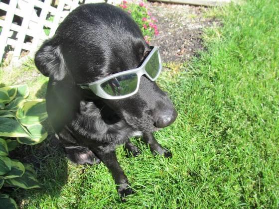 Casey enjoying the summer!