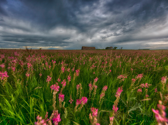 A Prairie View