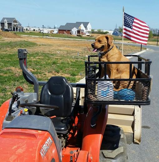 A Dog Named Diesel