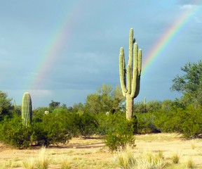Saguaro-CactusRainbow-AngelaMcCormick1