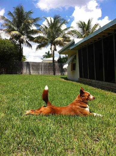 Tucker the dog, relaxing in the sun
