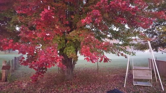 Fall morning 2016