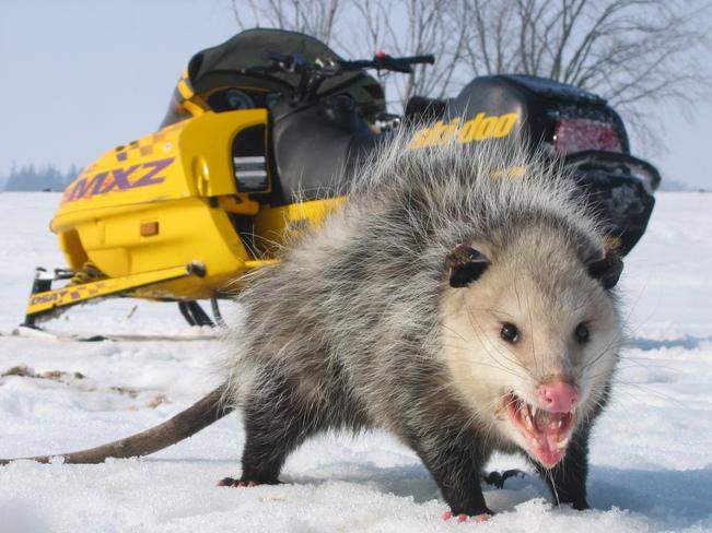 Possum nickname