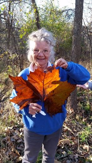 Biggest Leaf Found