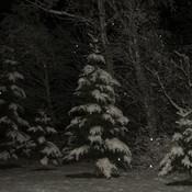 paysage feerique de nuit