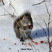 Squirrel in the wild..