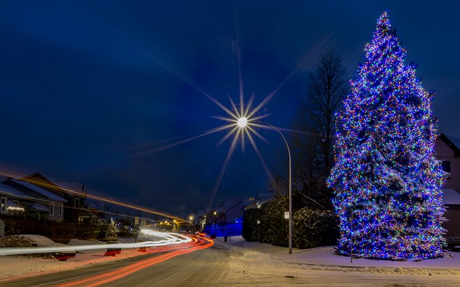 Photos the weather network - Vrai sapin de noel ...