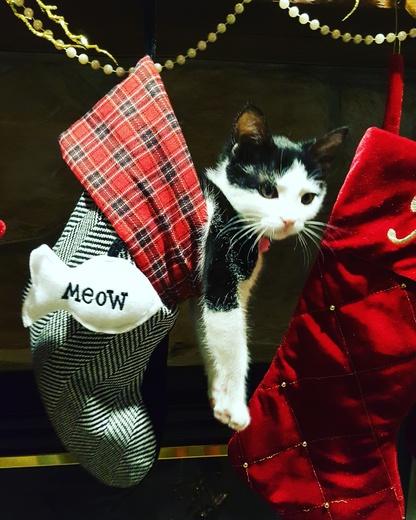 Kitten stocking stuffers