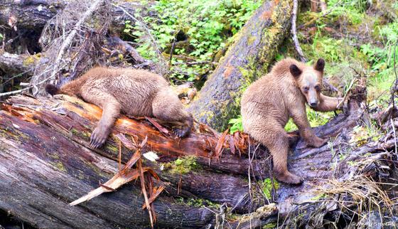 Monkey Bears