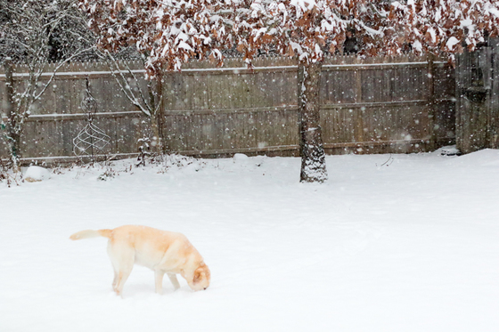Let Me Bury My Snout in the Snow