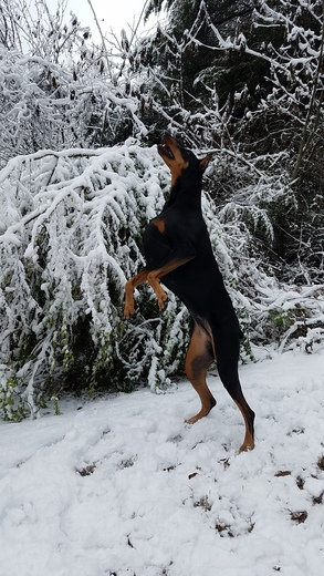 Sadie's jumping for joy over the snow! Catching snowflakes!!