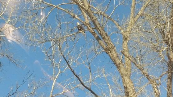 Eagle on old 210 near 291