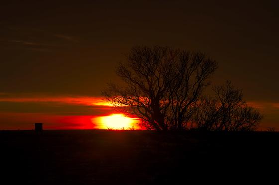 Dawn's Delight
