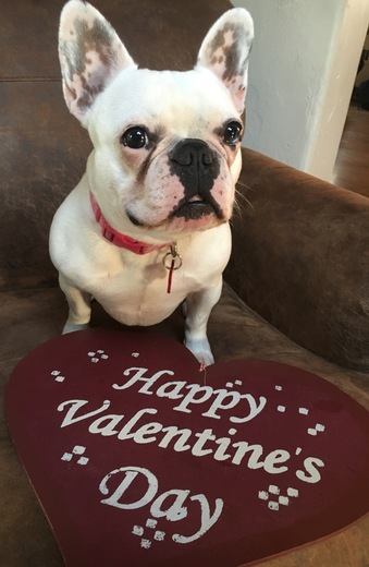 Stella says Happy Valentine's Day ❤️