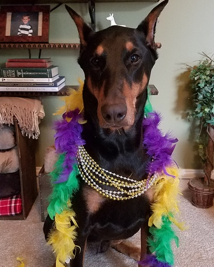 Sadie is ready for Mardi Gras!