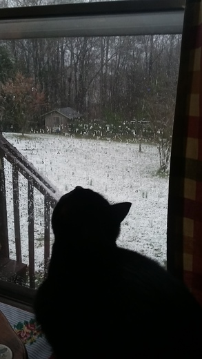 baazinga watching the snow