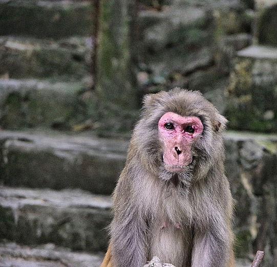 OMG Monkey Trouble