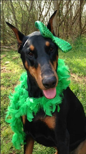 Sadie wishes everyone a Happy St. Patrick's Day!