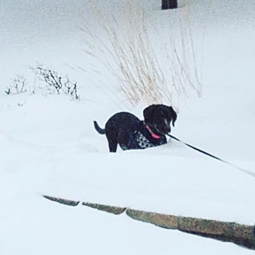 Stella 2017. Snow