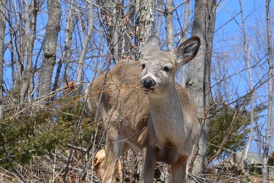 deer on hillside