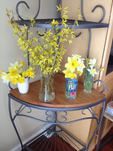 Spring Flowers: A Bright Spot Before the Storm