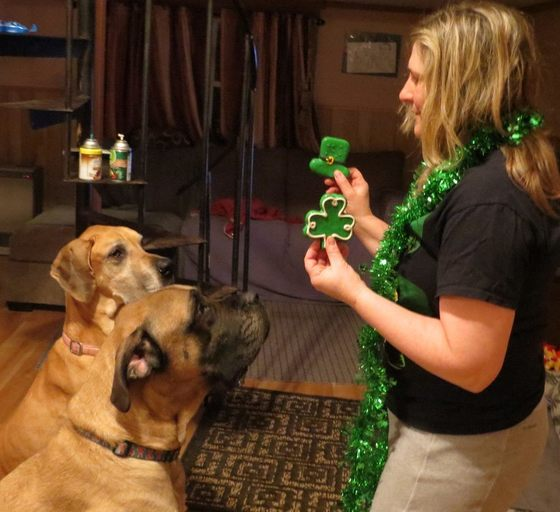 St Paddy's Day is for pets too!