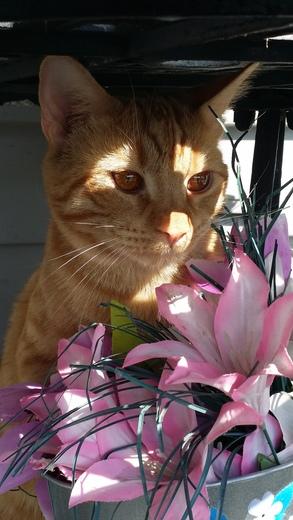 pringles says happy spring ; )