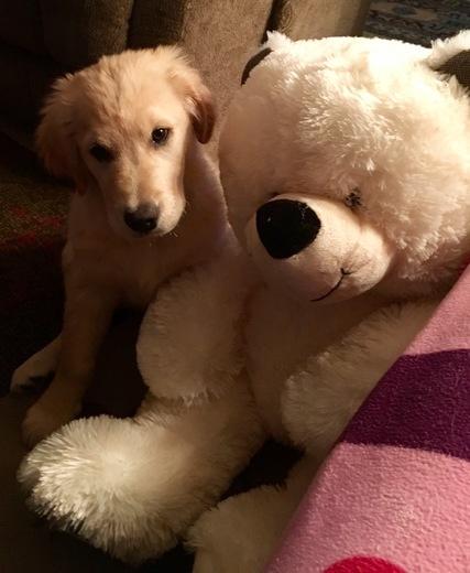 Ulfy and Buddy Bear