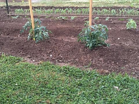 Louisiana Gardening