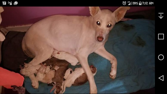 My dog sasha had 8 puppies on national puppy day