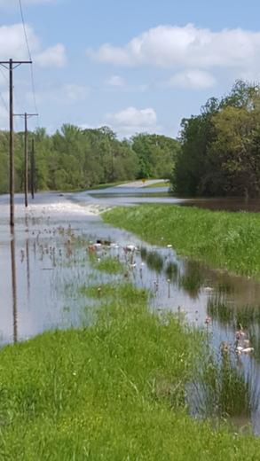 Flooding hwy 22 Flora