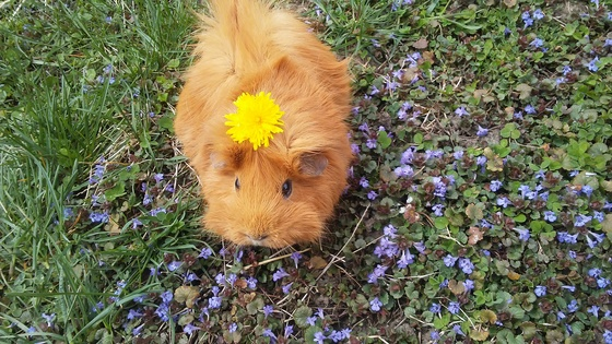 Bringing in spring