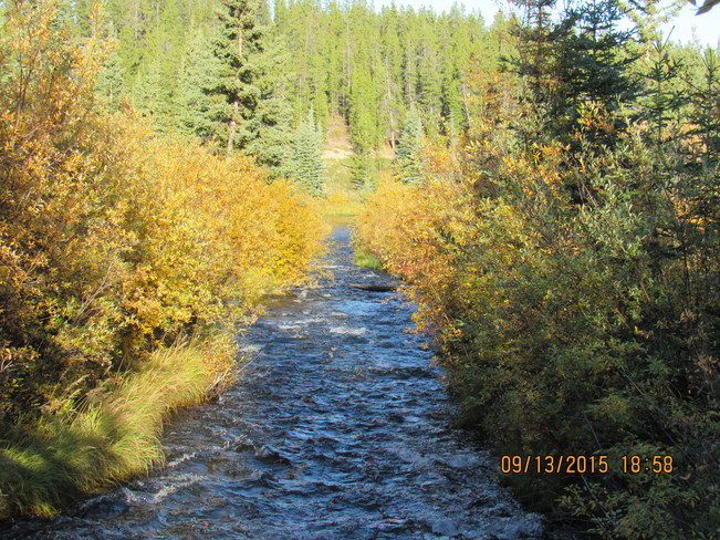 This is a fall time shot of McIntyre Creek from the bridge on 'My Urban Trail' Whitehorse Yukon Territory