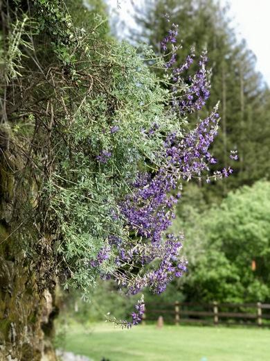 Soquel wild flowers