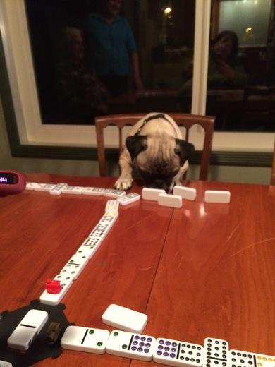 Talented Pug