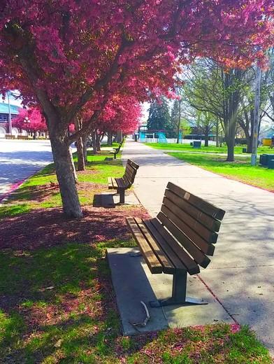 Fairground blooms