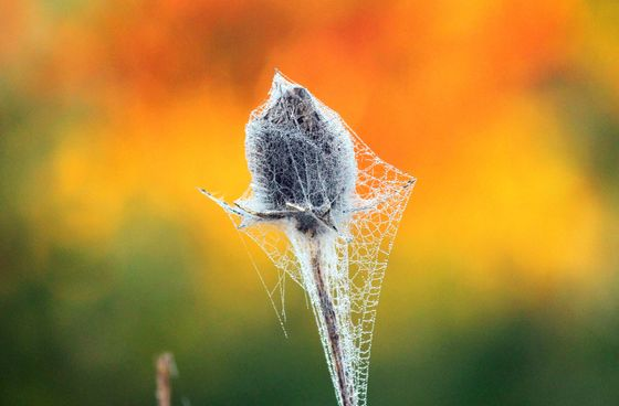 spider web covered reed