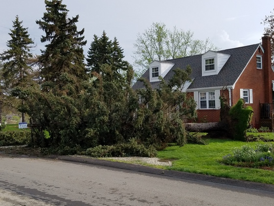 2 trees down in Irwin, PA