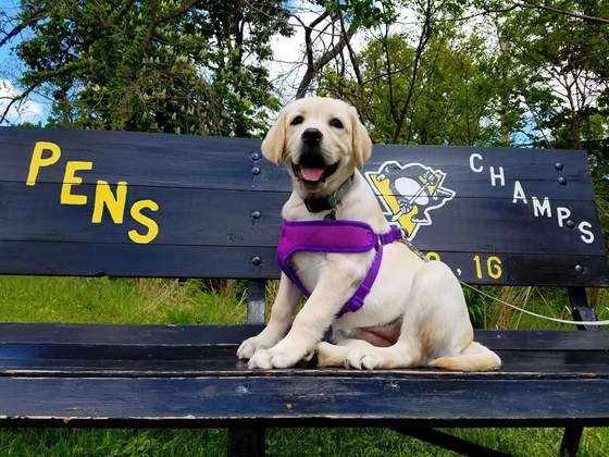 Puppy loves the pens!