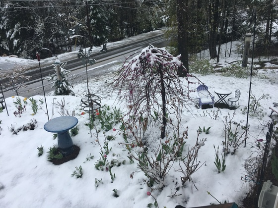May 14- Mother's Day snow!!
