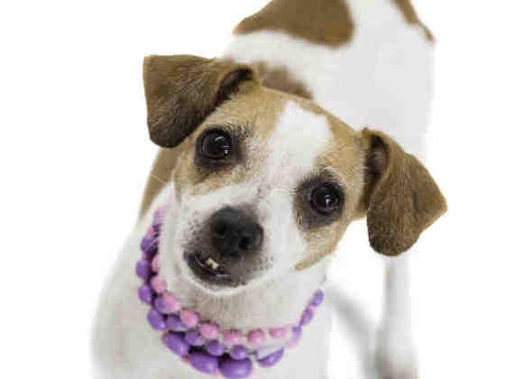 Penny 8yo adorable chigirl free to adopt/rescue!