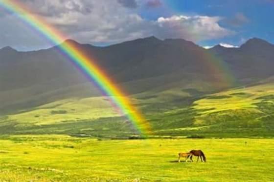 Rainbow Wonder!